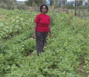 Dolichos Lablam (Njahi) plants in Mrs. Ann Wairimus' home in Ichuga D